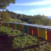 Territori incontaminati fra Piemonte e Liguria, qui vivono le api di Eden