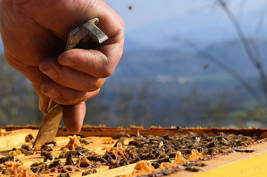 Il miele è speciale quando la natura fa la differenza