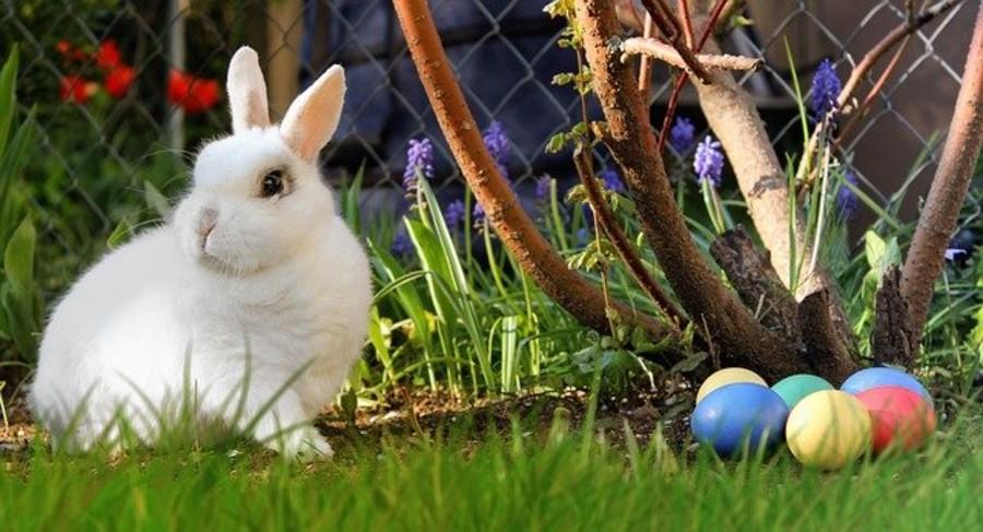 Caccia alle Uova con Easter Bunny
