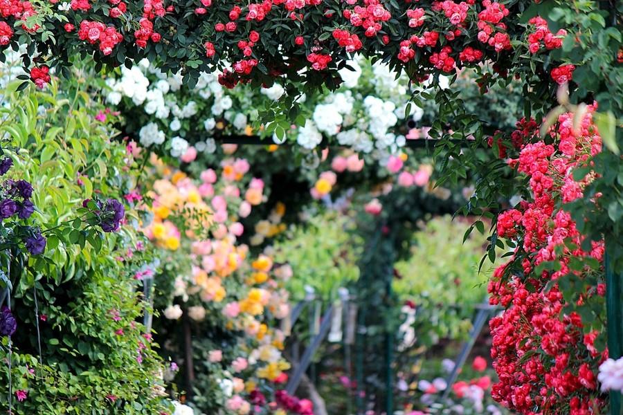 Il giardino segreto della Val Gardena che profuma di rose